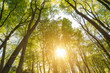 Sonnenbeschienenes laubdach im Wald