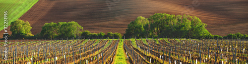 Tuinposter Wijngaard France vineyard in the evening