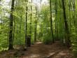 canvas print picture - Buchenwald, Nationalpark, Kellerwald-Edersee, Nordhessen