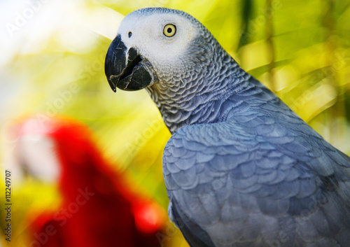 Close up profile of parrot