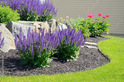 Photo sur Toile Taupe Salvia Flowers and Rock Retaining Wall