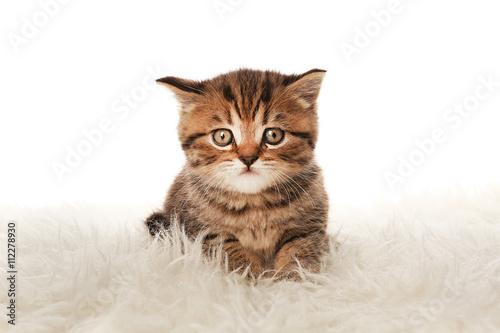 Foto op Aluminium Kat Small cute kitten on carpet