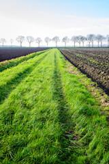 Fototapeta na wymiar Green strip between fields with tire tracks of a tractor