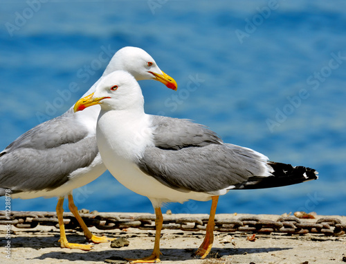 couple of seagulls sea background Wallpaper Mural