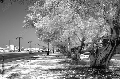 Monochrome infrared image of a tree lined street Plakat