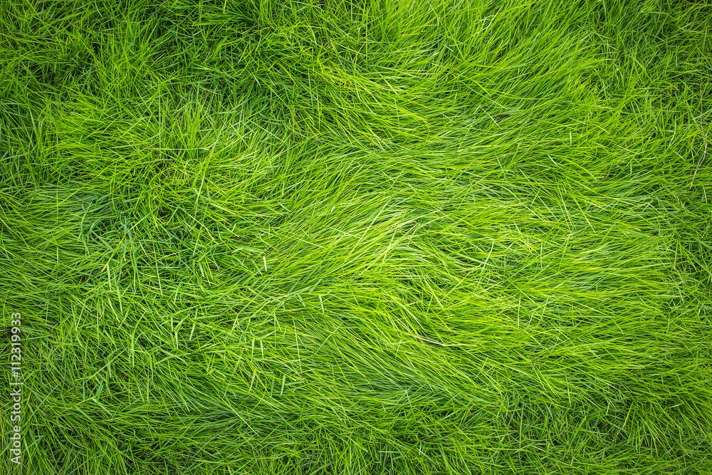 Fototapety, obrazy: Green grass, Grass top view