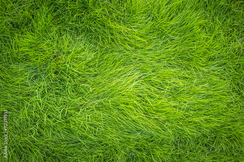 Photo sur Aluminium Herbe Green grass, Grass top view