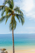 Turquoise Sea View with Palm Tree 1
