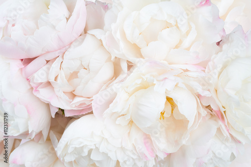 Beautiful floral background Poster