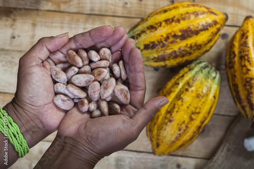 Fotografía  Agricultor de cacao
