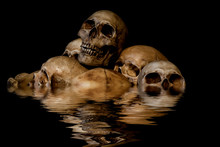 Pile Of Skulls And Animal Bones With Water Reflection. Genocides Concept, Creepy Horror Darkness Halloween