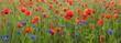 wiosenna łąka pokryta kwitnącymi kwiatami