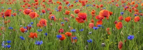 Fototapeta wiosenna łąka pokryta kwitnącymi kwiatami obraz