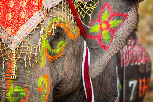 Fotobehang Olifant Close up of colorful painted elephant head