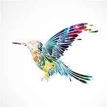 Oiseau Coloré,colibri