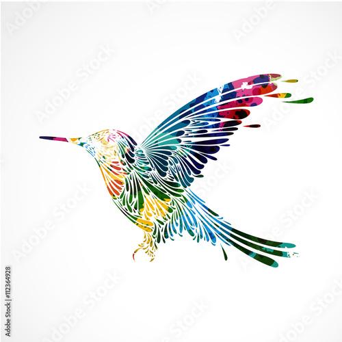 kolorowy ptak, koliber