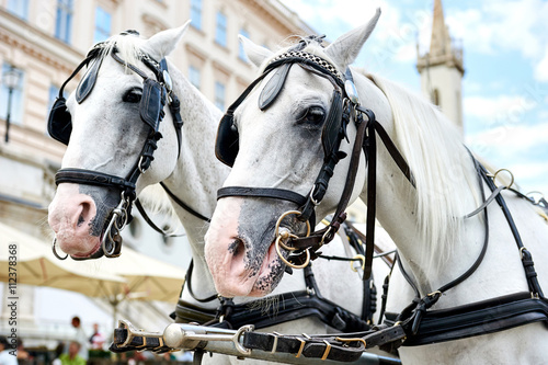 Valokuvatapetti Horse-drawn carriage in Vienna, Austria