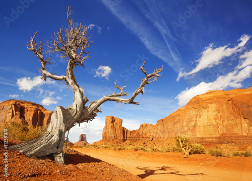 suche-drzewo-z-boku-drogi-gruntowej-w-dolinie-pomnikowej