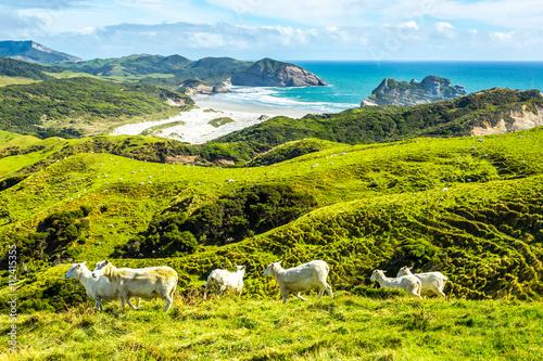 Poster Nouvelle Zélande West Coast #3, Southern Island, New Zealand