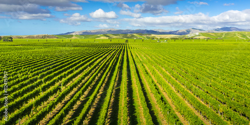 Vineyard Marlborough region, New Zealand