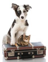 Welpe Und Kätzchen Mit Koffer