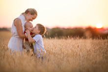 Happy Family Enjoying Sunset In Wheat Field. Beautiful Young Woman With Adorable Baby Boy And Kid Boy. Mother Hugging Her Two Children On A Meadow On A Sunny Evening. Mom And Sons. Outdoors.