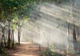 Światło słoneczne w lesie z mgłą - 112436712