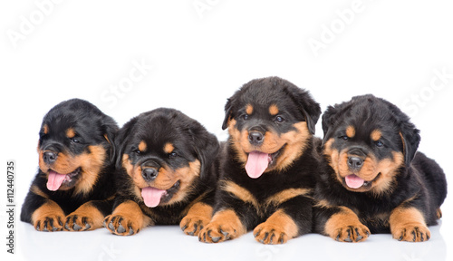 Photo Group of puppies Rottweiler lying together in front view. Isolat