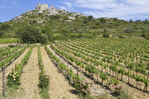 фотография  Le château d'Aguilar au dessus des vignes