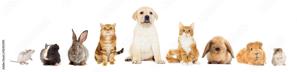 Fototapety, obrazy: group of pets