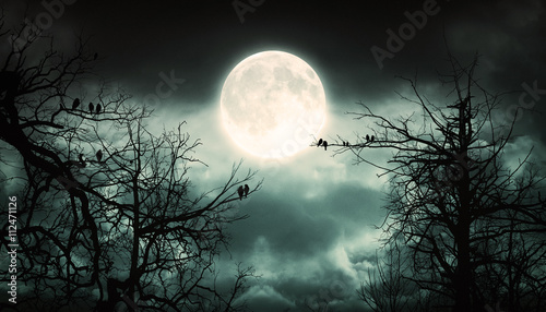 Poster Kaki Night Forest With Moon Background.