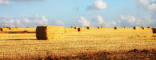 Panoramic Image Of Gold Wheat Haystacks Field At Sunset Light
