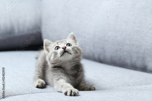 Foto op Aluminium Kat Beautiful little cat on a grey sofa