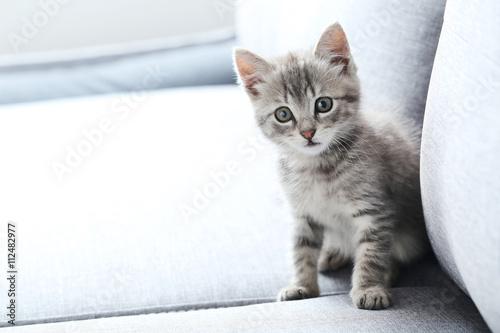 Foto op Aluminium Kat Beautiful little cat on a grey sofa