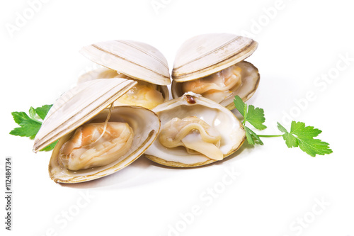 isolated clams Wallpaper Mural