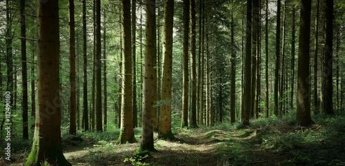 Tuinposter Weg in bos Panorama de sous-bois au printemps avec un chemin