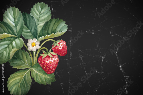 Watercolor strawberry bush - 112492781
