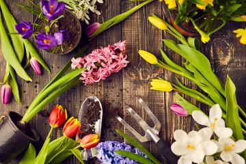 Tulips, hyacinths, crocuses and gardening tools