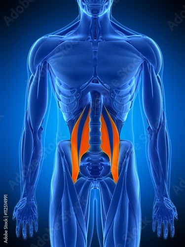 Cuadros en Lienzo medically accurate illustration of the psoas major
