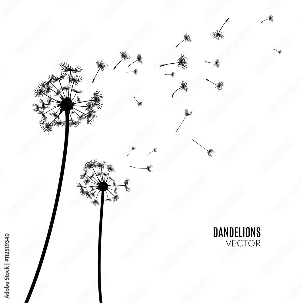 Fototapety, obrazy: Vector Dandelion silhouette. Flying dandelion buds black on white.