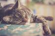 Katze liegt entspannt auf rustikalem Holztisch, retro