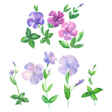 Set Of Blue And Pink Flowers On A White Background, Watercolor Painting, Periwinkle