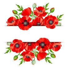 Vector Background Banner With Red Poppies.