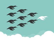 Flock Of Mallard Flying In The Sky, Leadership Concept, Wild Duc