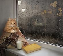 A Cat On A Windowsill.