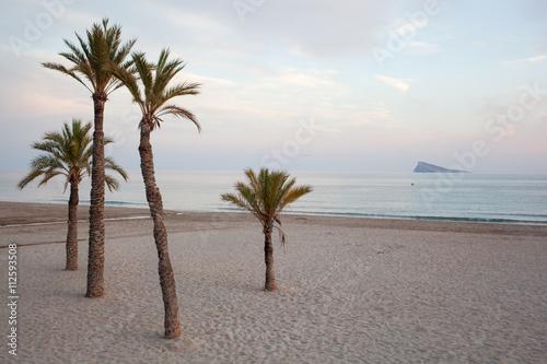 Benidorm Alicante beach palm trees