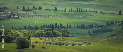 Fotobehang Olijf typical tuscan landscape