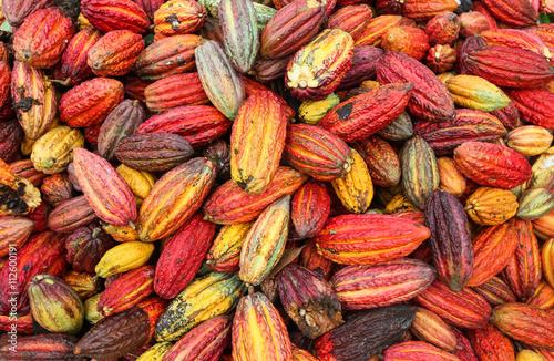 Fotografía  Tingo María, PERÚ - 22 de junio: Una vista de los productores de cacao de la coo