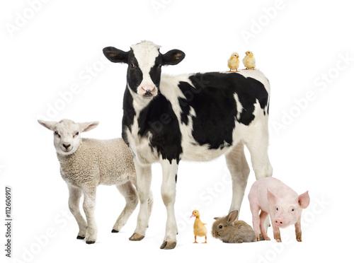 Carta da parati Group of farm animals isolated on white
