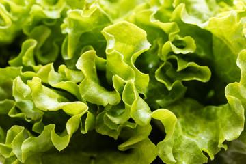 Panel Szklany Warzywa texture of fresh lettuce